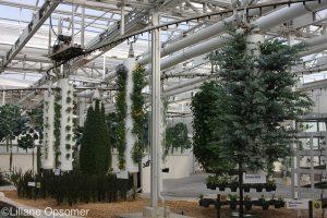 Herbs epcot