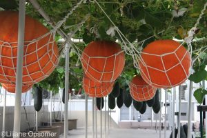 Pumpkins closeup