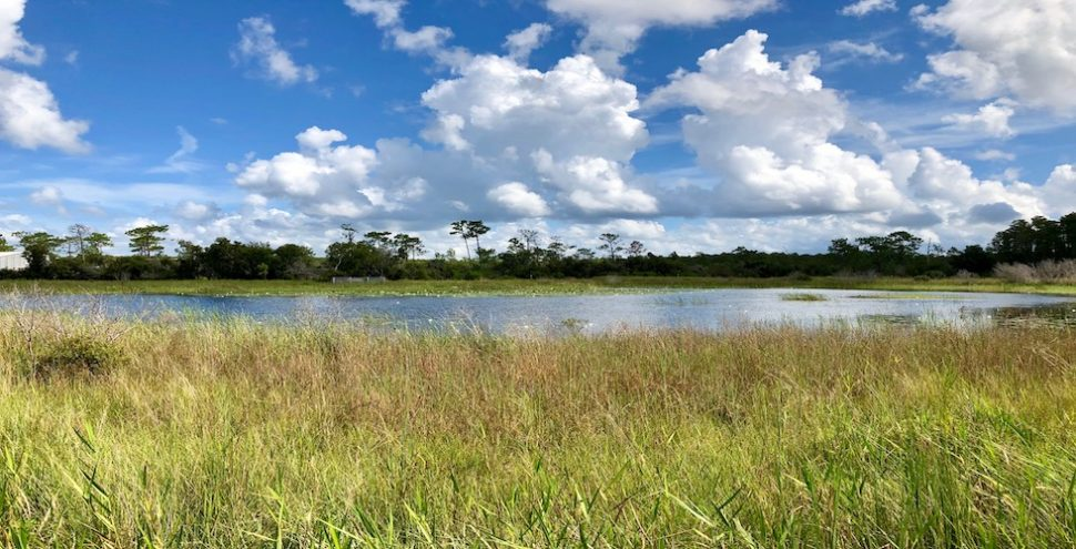 Wilderness Preserve Featured Image