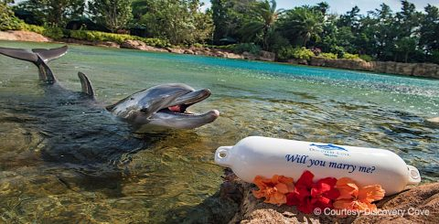 Discovery Cove Valentine's Buyo Banner