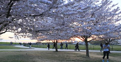 DC Spring Banner