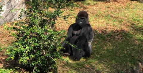 Gorilla Falls Exploration Trail featured